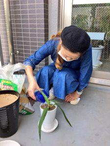 観葉植物を入れて🎵