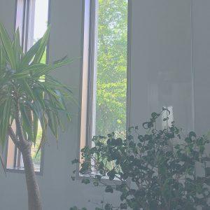 ♡お店の前の植物さん達♡