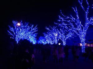 去年の青の洞窟💎