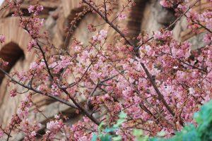 メディテレーニアンハーバーに、咲いています✨