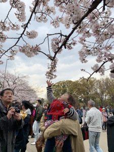 🌸桜と、彩叶