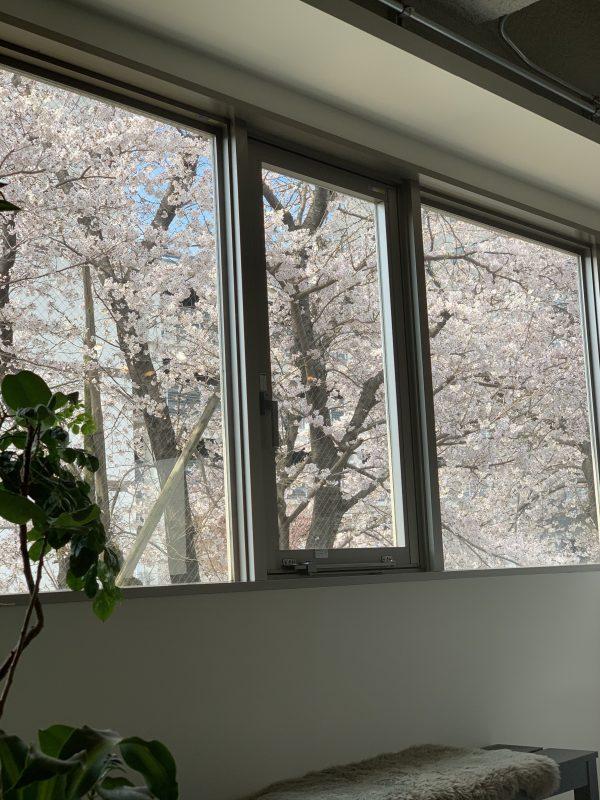 窓から見える景色🌸