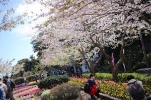 桜も綺麗でした🌸